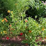 Gardening 2010, Part Three - 101_3689.JPG