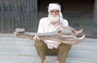 Questões e Fatos sobre Crocodilianos gigantes: Transferência de debate da comunidade Conflitos Selvagens.  - Página 2 Old-man-and-skull2