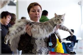 cats-show-24-03-2012-fife-spb-www.coonplanet.ru-096.jpg