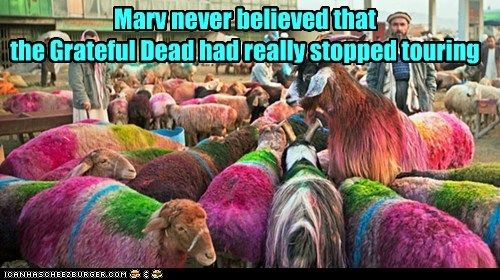 Grateful%2520Sheep.jpg