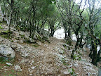 HINTERLAND Ikaria 20: Inside the ancient oak forest