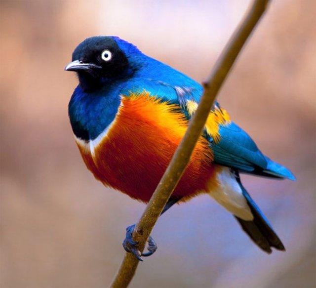 world beautiful images: Amazing Birds Photography - photo#48