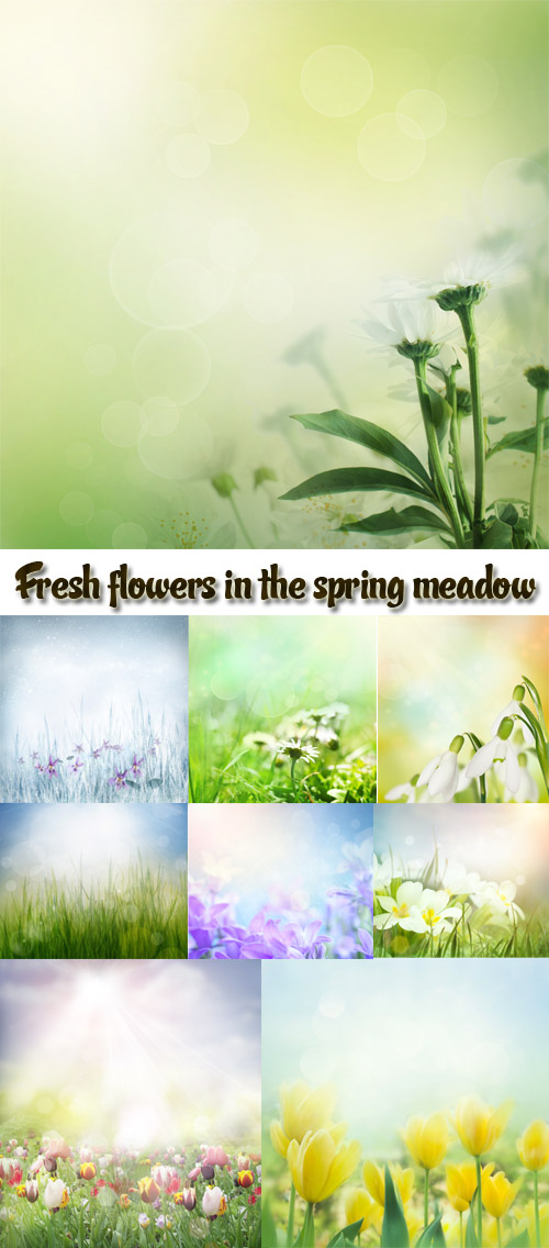 Stock Photo: Fresh flowers in the spring meadow
