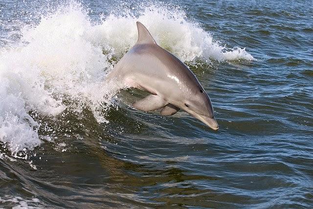 Dolfijn dating site