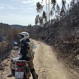 Federação de Motociclismo de Portugal vai apoiar reflorestação da área ardida.jpg