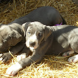 Star & True Blues February 21, 2008 Litter - HPIM1213.JPG