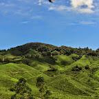 Cameron Highlands - Teeplantage