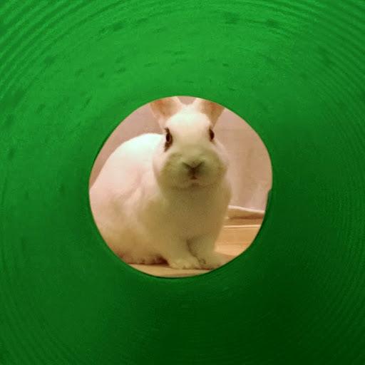 Meiko, lapin blanc à l'oeil au beurre noir!-[adopté] 352071WP20140712221638Pro2