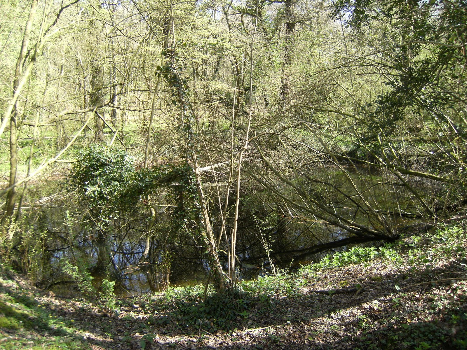 1004170002 Pond above collapsed Greywell Tunnel