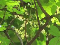 https://lh3.googleusercontent.com/-dauIdqp2NNU/T2_vr9fQnNI/AAAAAAAAAAk/U796-x4ISik/s1600/Kusum+Tree+-+Flower.jpg