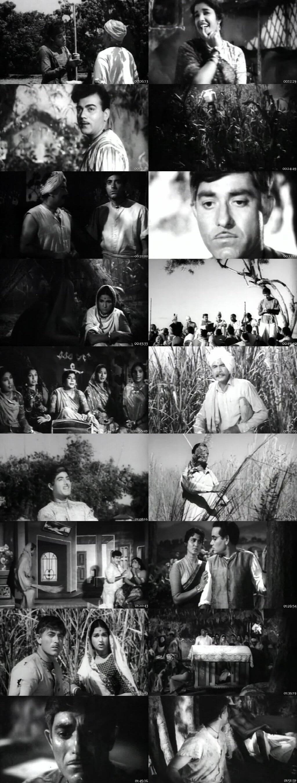 Screen Shot Of Godaan 1963 300MB HDRip 480P Full Hindi Movie Watch Online Free Download