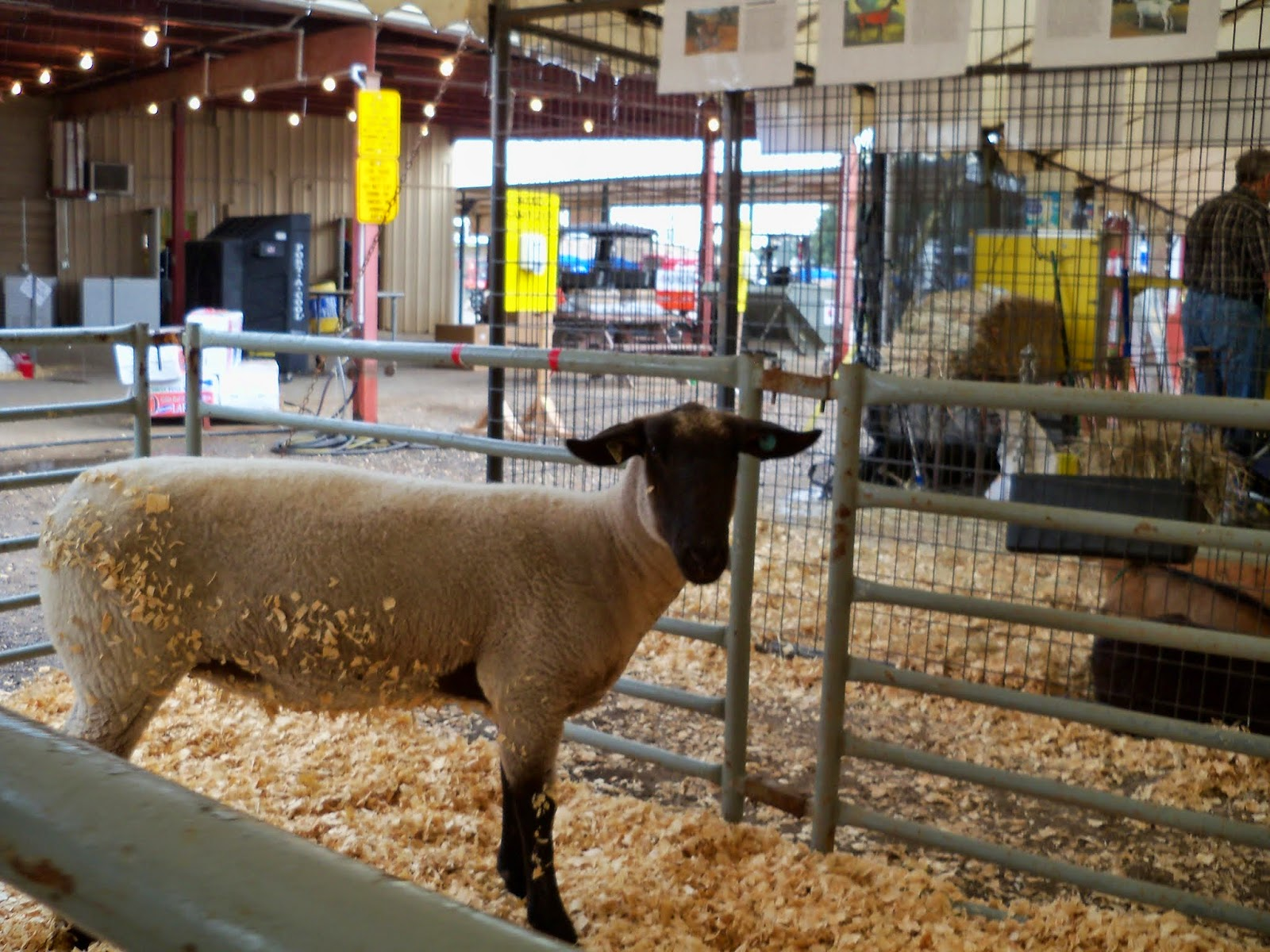 Fort Bend County Fair 2014 - 116_4218.JPG