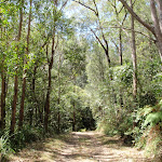 Easy walking in great forest scenery (200224)