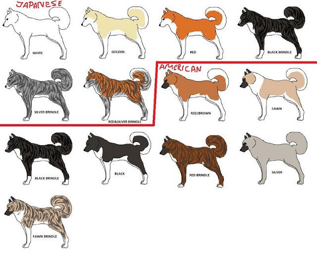 Chó Akita Inu. Mua bán chó Akita giá bao nhiêu ở Việt Nam?