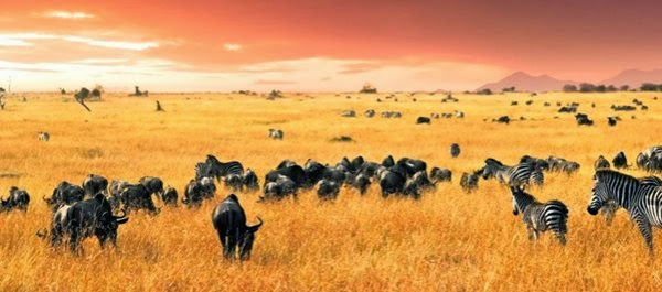 Maasai Mara - Férias no Quénia