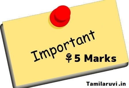 12th All Subject Important 5 Mark Questions Collection - PDF