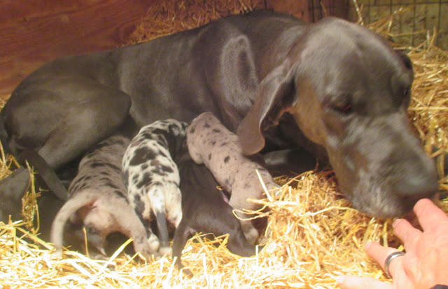 Saffy & babies @ 2 weeks
