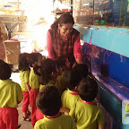Field Trip to Aquarium by Nursery Evening Section at Witty World, Chikoowadi (2017-18)