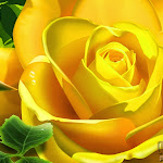 Flower 003_1280px.jpg