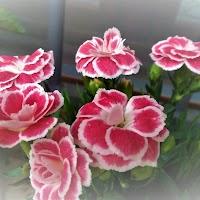 primavera-luminasioIMAG0227.jpg