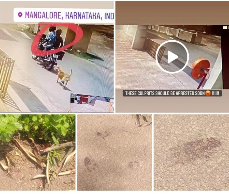 Mangalore; ಚಪ್ಪಲಿ ಕಚ್ಚಿದ ನಾಯಿಗೆ ಹೀಗೆ ಮಾಡೋದ? ಕುಡ್ಲದಲ್ಲೂ ನಡೆಯಿತು ಅಮಾನವೀಯ ಕೃತ್ಯ! ( video)