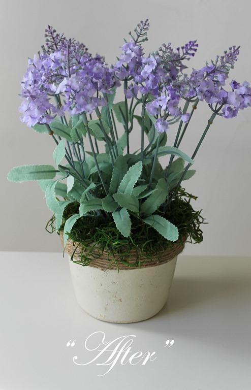 Lavender 012