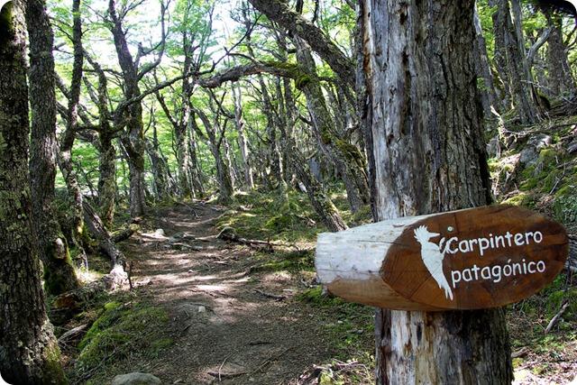 el-chalten-forest-1000