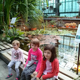 kasztanek w ogrodzie
