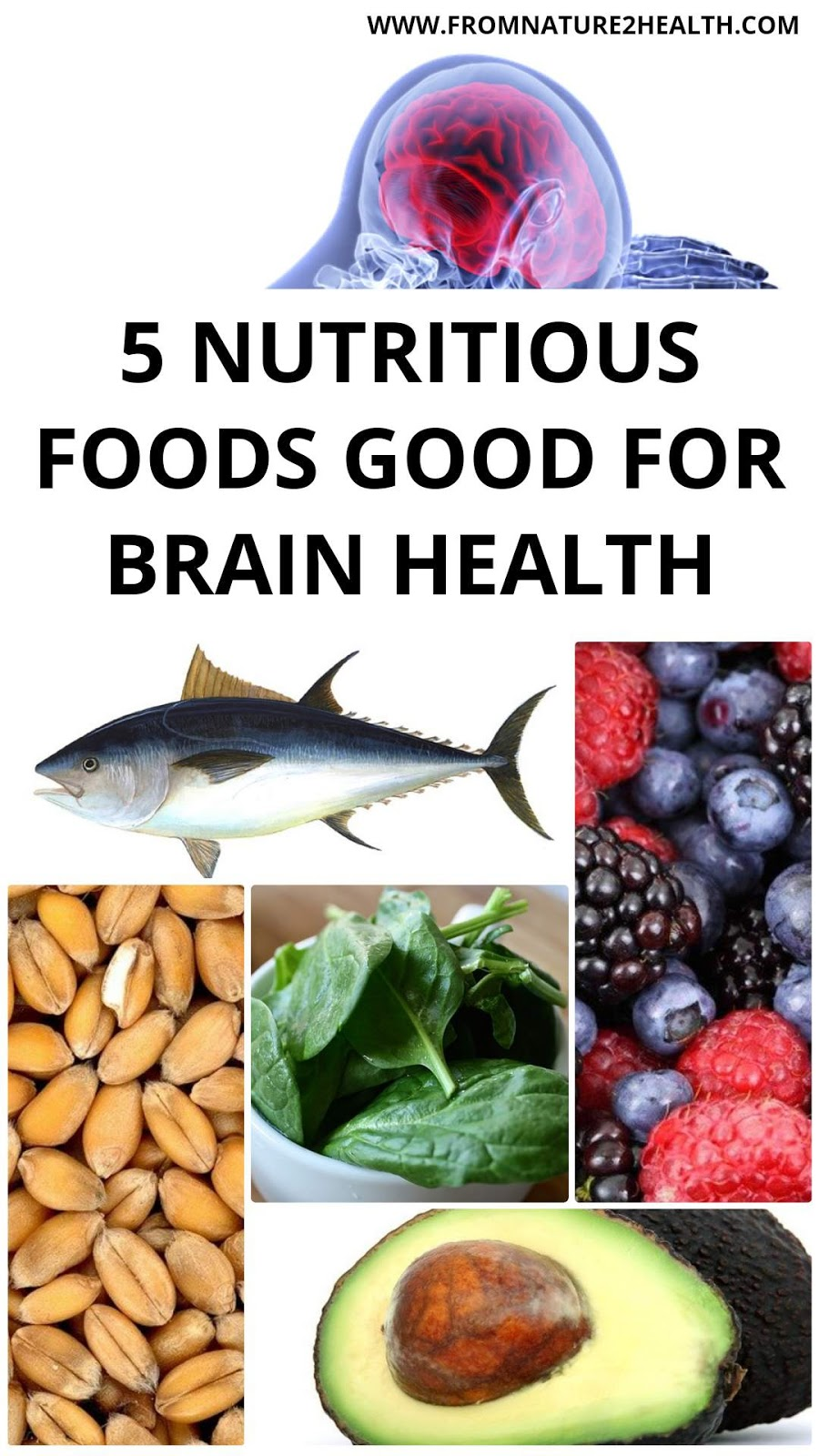 5 Nutritious Foods Good for Brain Health