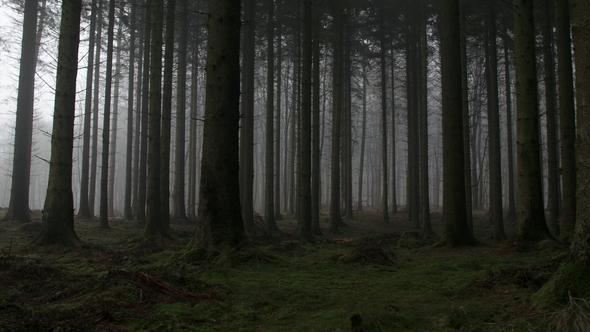 A Pilgrim to Nowhere || by John Grey