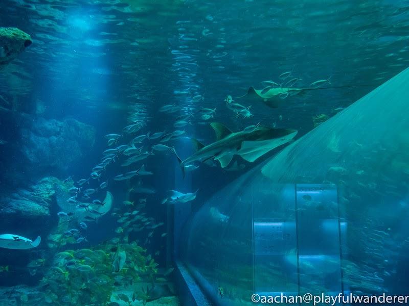 aquapark (23 - 35).jpg
