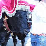 CaminandoalRocio2011_188.JPG