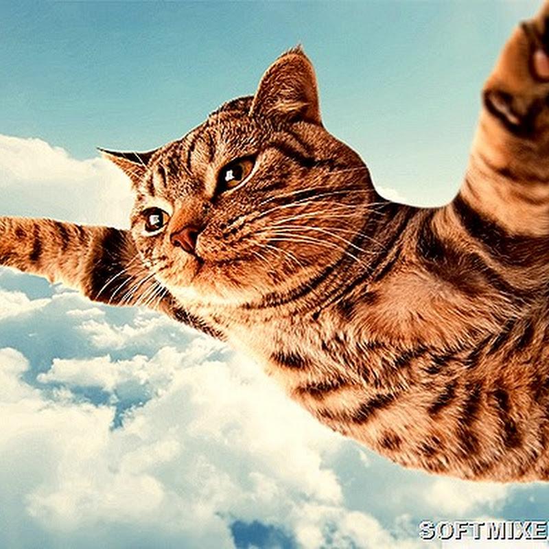Коты, что парят словно птицы…