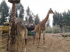 Zoologico de Santiago