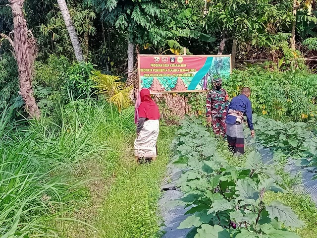 Babinsa Galakan Budidaya Terong Ungu program Desa Kertaraharja