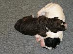C Pups week 2