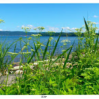 20120620-01-green-by-the-lake.jpg