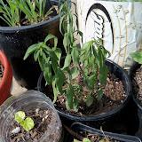 Gardening 2010, Part Two - 101_3132.JPG