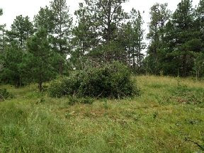 460' of Fence Line Clearing Sept 2014: One of the smaller bush piles