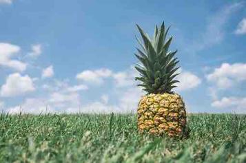 Manfaat nanas untuk kesehatan