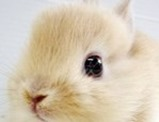 Cute-Rabbit-03 (1)C