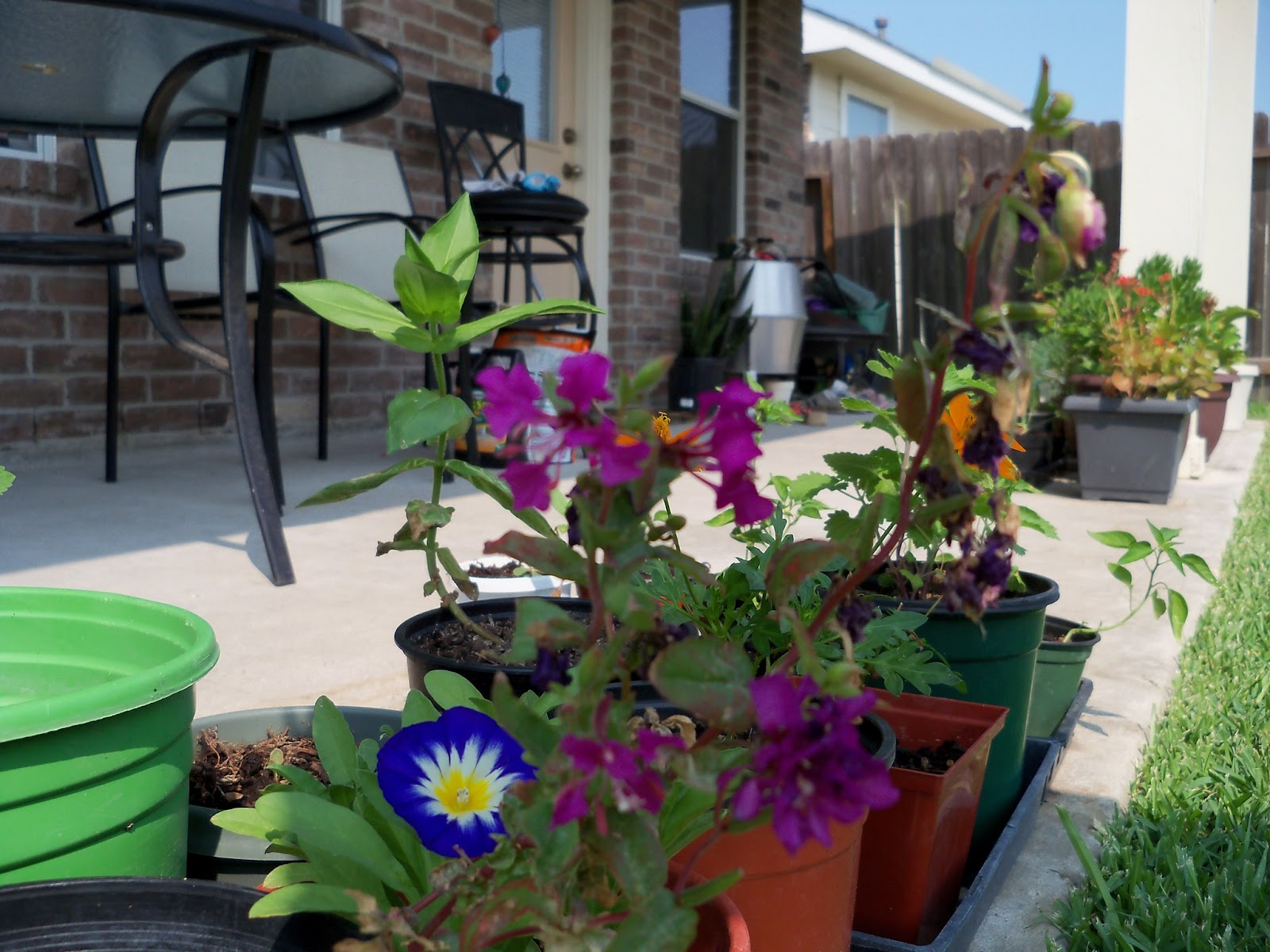 Gardening 2011 - 100_9296.JPG
