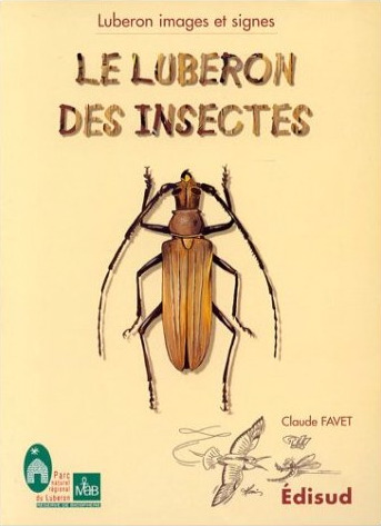 Provence - luberon_des_insectes.jpg