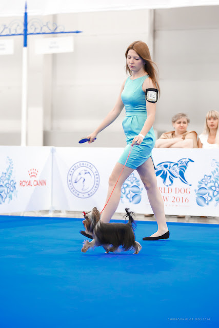 World Dog Show-2016 0068