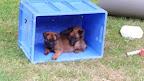 pups 5,5 weken 2015 217.jpg