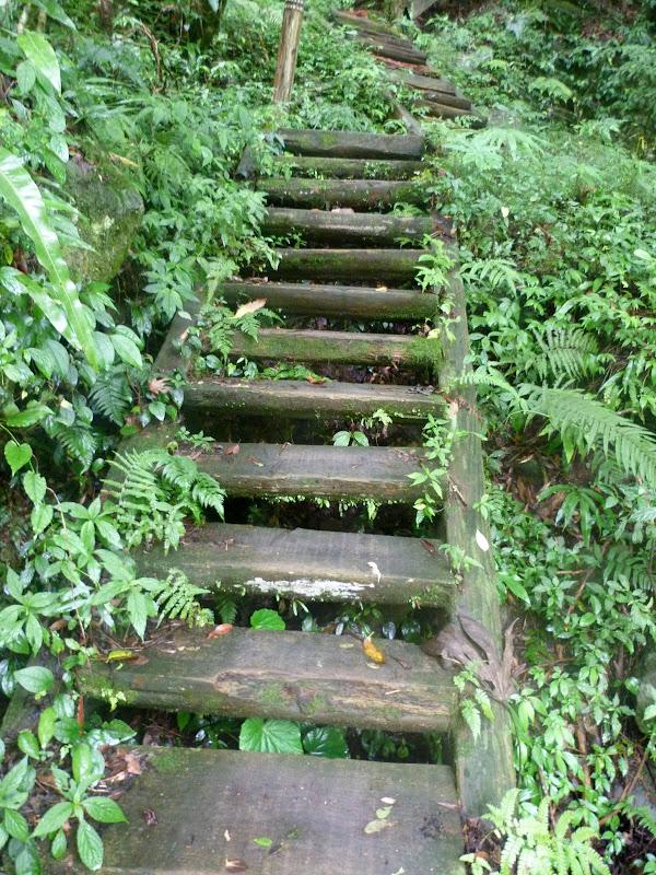 Petite randonnée au sud de Taufen, dans la région de Miaoli - P1330605.JPG