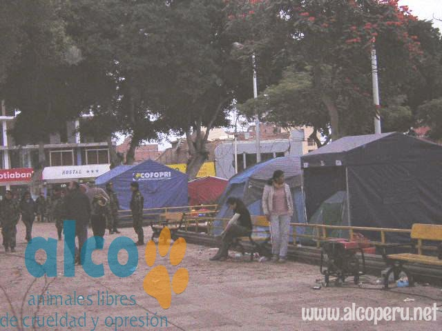 1era visita asistencia animales damnificados terremoto  Pisco 2007 (8)