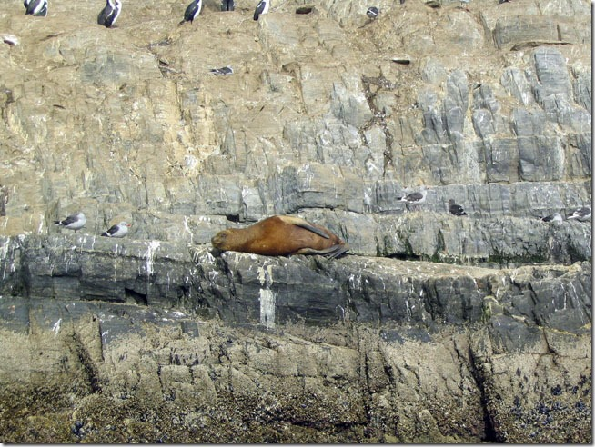 Ushuaia_ilha-dos-lobos-2