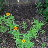 Gardening 2010, Part Two - 101_2675.JPG