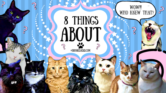 8 Things About The B Team Banner 10 cats, questions, about, cat life